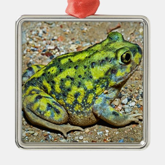 A Couch's Spadefoot toad Metal Ornament