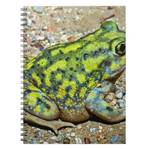 A Couch's Spadefoot toad Note Book