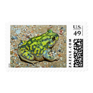 A Couch's Spadefoot toad Postage Stamp