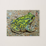 A Couch's Spadefoot toad Puzzles