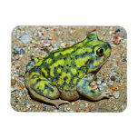 A Couch's Spadefoot toad Rectangle Magnets