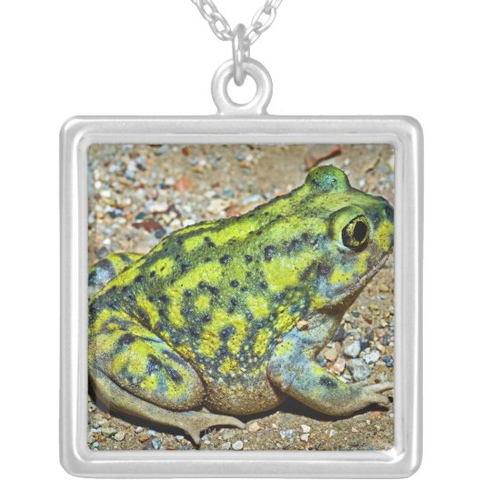 A Couch's Spadefoot toad Silver Plated Necklace