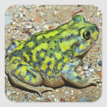 A Couch's Spadefoot toad Square Sticker