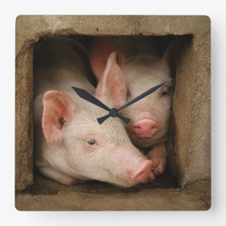 A couple of curious piglets stick their heads square wall clock