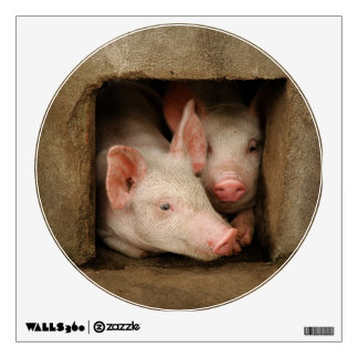 A couple of curious piglets stick their heads room sticker