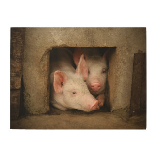 A couple of curious piglets stick their heads wood wall art