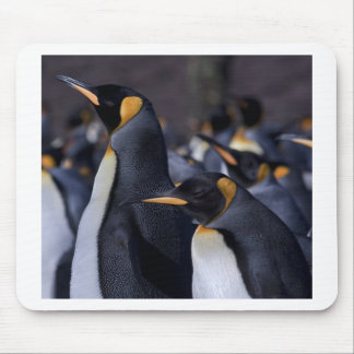 A couple of King Penguins Mouse Pad