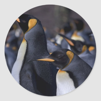 A couple of King Penguins Stickers