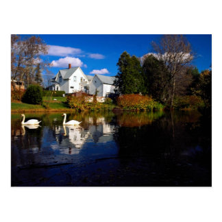 A couple of swans in pond, Ayer's Cliff, Quebec, C Postcard