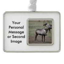 A couple Reindeer in a field on a caribou farm Christmas Ornament