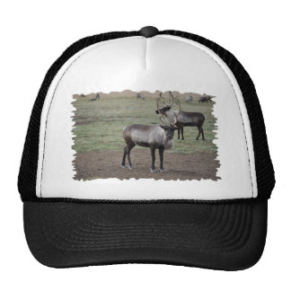 A couple Reindeer in a field on a caribou farm Mesh Hats