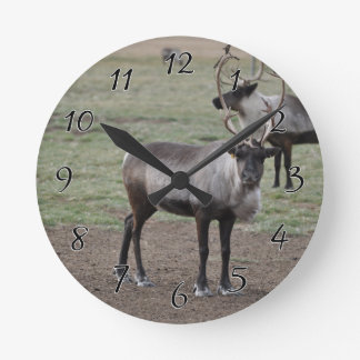 A couple Reindeer in a field on a caribou farm Round Clock