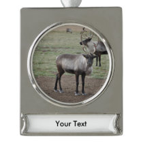 A couple Reindeer in a field on a caribou farm Silver Plated Banner Ornament