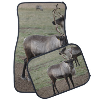 A couple Reindeer in a field on a caribou farm Car Mat