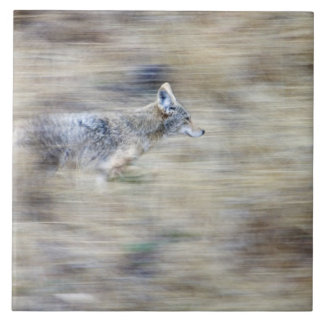 A coyote runs through the hillside blending into ceramic tile
