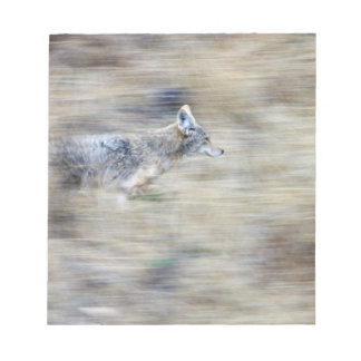 A coyote runs through the hillside blending into notepad
