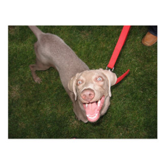 A Crazy Dog Named Scout Postcard