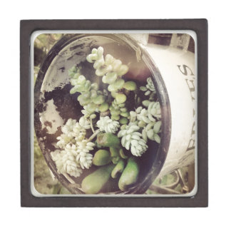 A cup full of succulent plants gift box