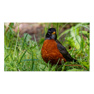 A Curious American Robin Business Card