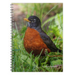 A Curious American Robin Notebook