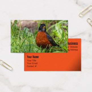 A Curious and Hopeful American Robin Business Card