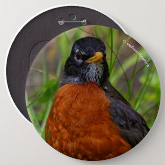 A Curious and Hopeful American Robin Button