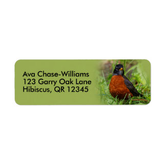 A Curious and Hopeful American Robin Label