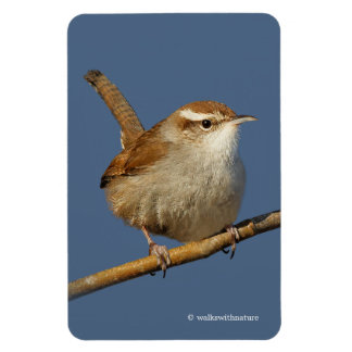 A Curious Bewick's Wren in the Tree Magnet