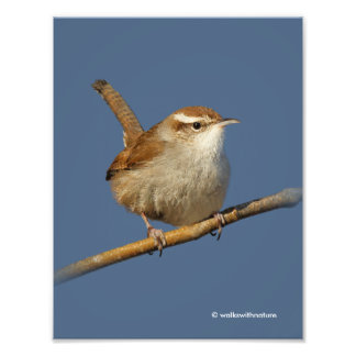 A Curious Bewick's Wren in the Tree Photo Print