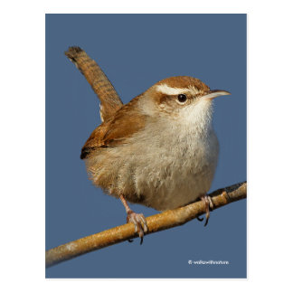 A Curious Bewick's Wren in the Tree Postcard