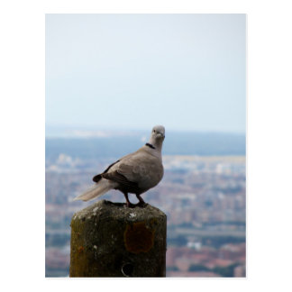 A curious collared dove on top of the world postcard