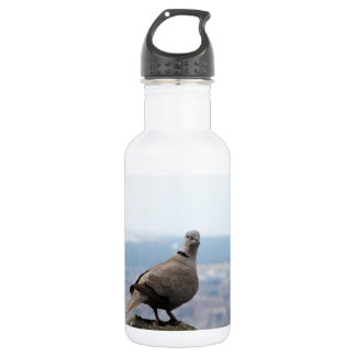 A curious collared dove on top of the world stainless steel water bottle
