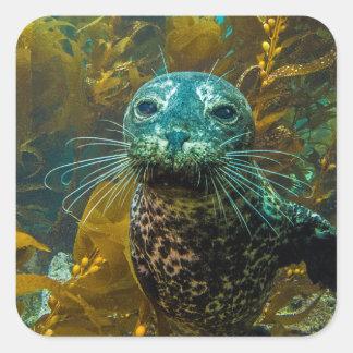 A Curious Harbor Seal Kelp Forest | Santa Barbara