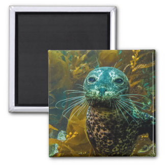 A Curious Harbor Seal Kelp Forest | Santa Barbara Magnet