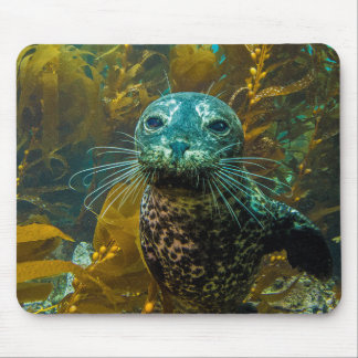 A Curious Harbor Seal Kelp Forest | Santa Barbara Mouse Pad