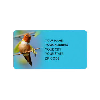 A Curious Rufous Hummingbird Label