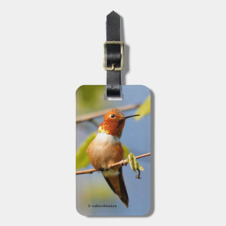 A Curious Rufous Hummingbird Luggage Tag