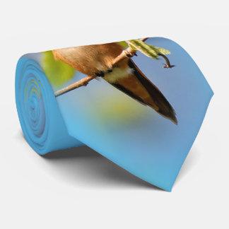 A Curious Rufous Hummingbird Neck Tie