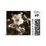 A Custom Postage Stamp - Fall Anemone in Sepia