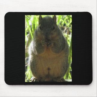 A cute, adorable squirrel picture mouse pad
