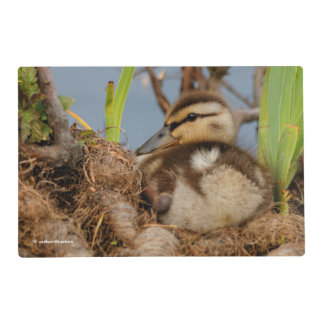 A Cute and Precocious Mallard Duckling Placemat