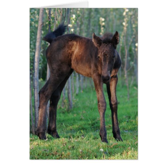 A cute baby foal card