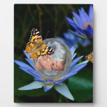 A cute baby lily butterfly bubble display plaque