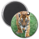 A cute baby tiger 2 inch round magnet