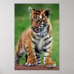 A cute baby tiger cub print