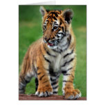 A cute baby tiger greeting card