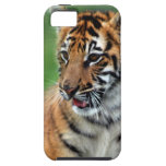 A cute baby tiger iPhone 5 cover