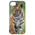 A cute baby tiger iPhone 5 covers