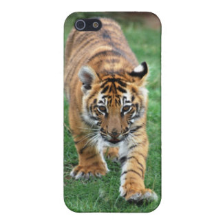 A cute baby tiger iPhone SE/5/5s cover