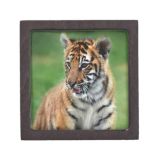 A cute baby tiger keepsake box